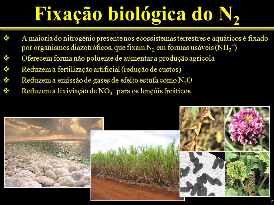 Fixação biológica do N 2 A maioria do nitrogênio presente nos ecossistemas terrestres e aquáticos é fixado por organismos diazotróficos, que fixam N 2