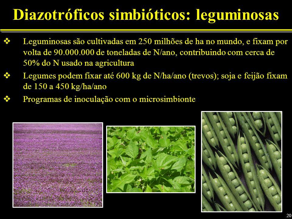 Leguminosas são cultivadas em 250 milhões de ha no mundo, e fixam por volta de 90.000.000 de toneladas de N/ano, contribuindo com cerca de 50% do N usado na agricultura Legumes podem fixar até 600 kg de N/ha/ano (trevos); soja e feijão fixam de 150 a 450 kg/ha/ano Programas de inoculação com o microsimbionte Diazotróficos simbióticos: leguminosas 20