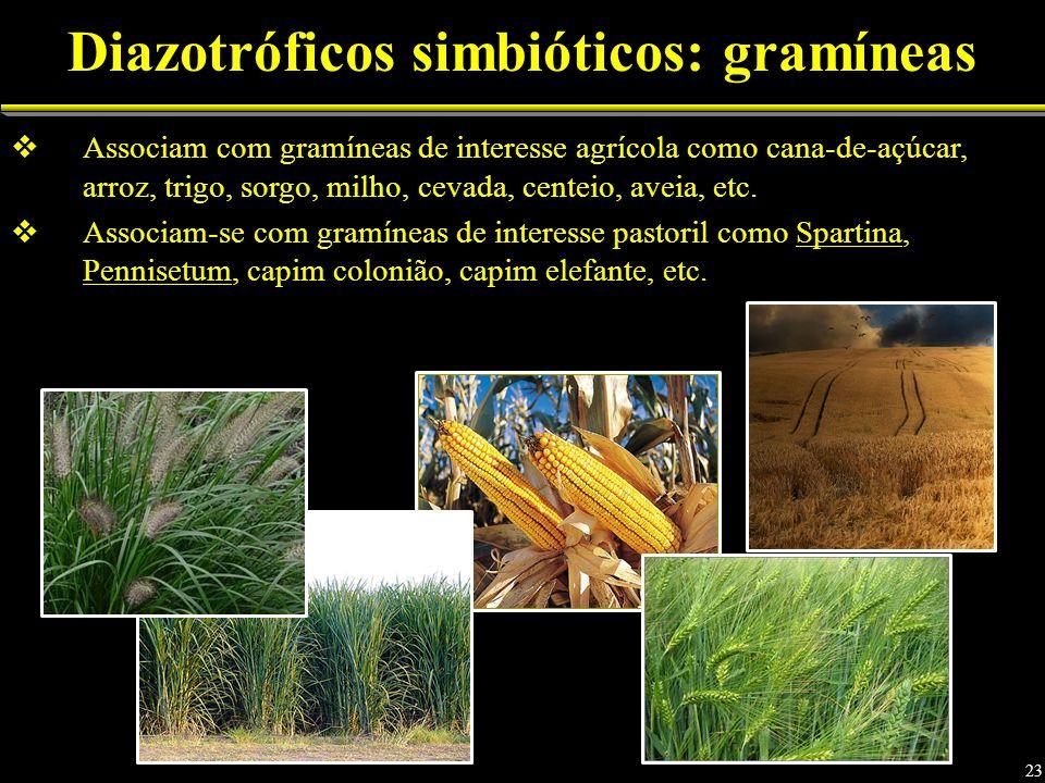 Associam com gramíneas de interesse agrícola como cana-de-açúcar, arroz, trigo, sorgo, milho, cevada, centeio, aveia, etc. Associam-se com gramíneas d