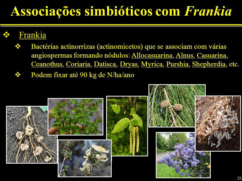 Associações simbióticos com Frankia Frankia Bactérias actinorrizas (actinomicetos) que se associam com várias angiospermas formando nódulos: Allocasuarina, Alnus, Casuarina, Ceanothus, Coriaria, Datisca, Dryas, Myrica, Purshia, Shepherdia, etc.