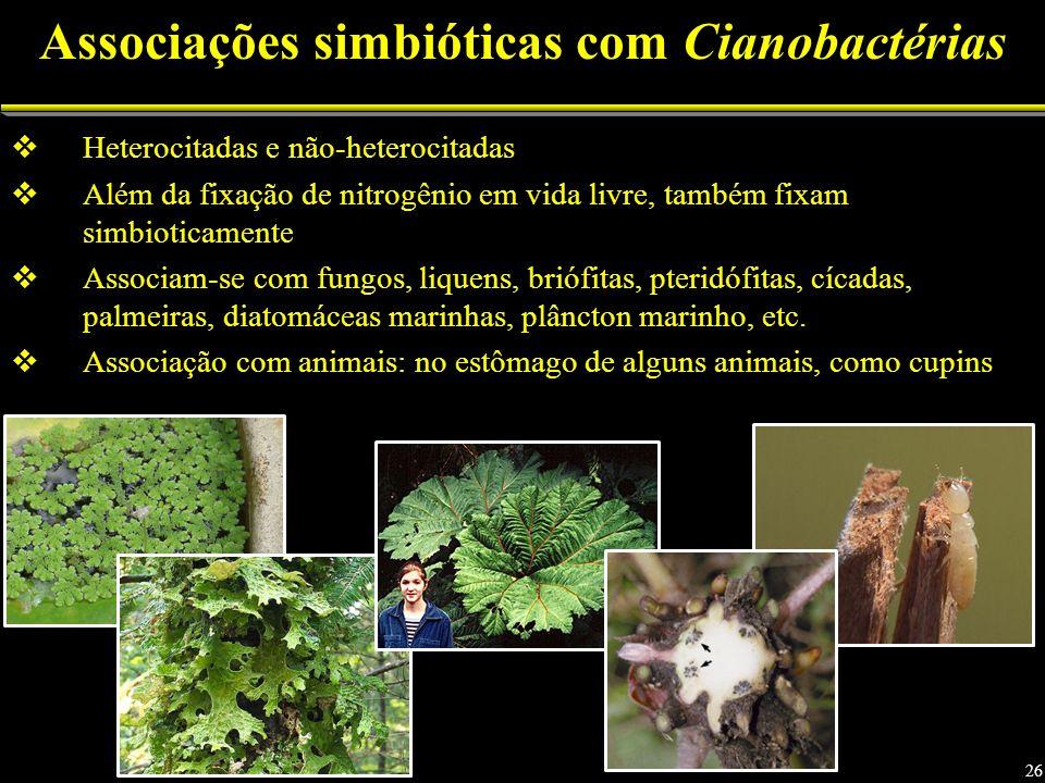 Heterocitadas e não-heterocitadas Além da fixação de nitrogênio em vida livre, também fixam simbioticamente Associam-se com fungos, liquens, briófitas