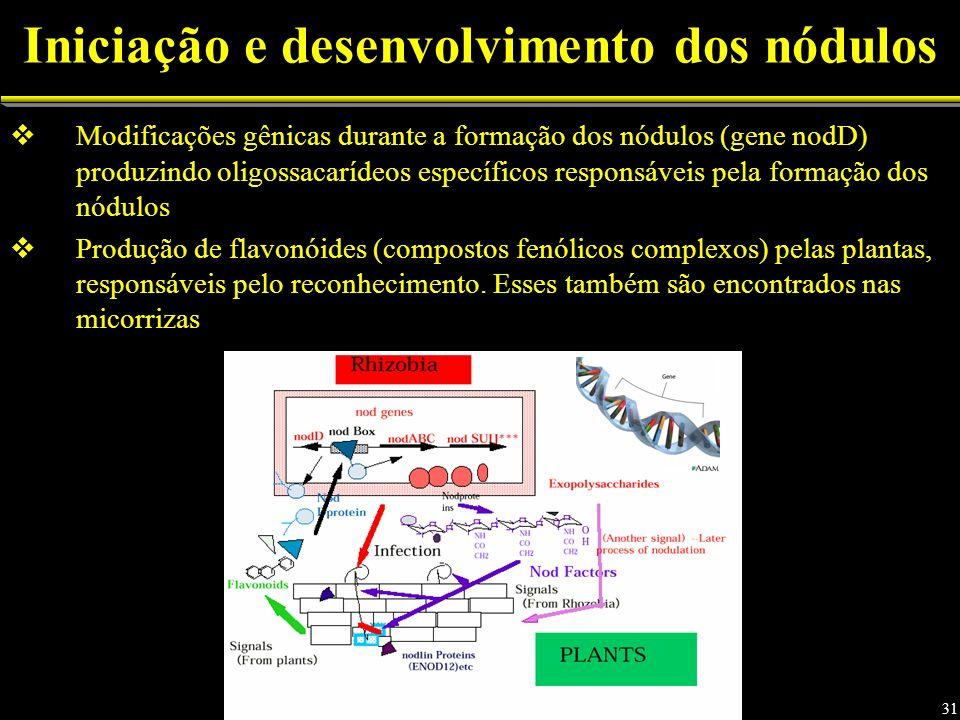 Modificações gênicas durante a formação dos nódulos (gene nodD) produzindo oligossacarídeos específicos responsáveis pela formação dos nódulos Produção de flavonóides (compostos fenólicos complexos) pelas plantas, responsáveis pelo reconhecimento.