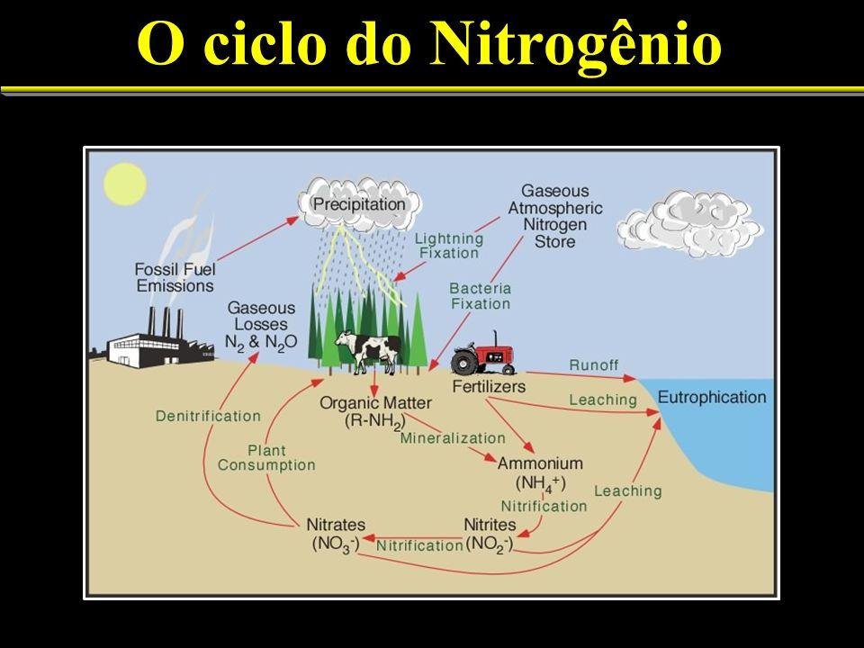 N 2 fixado a NH 3 + convertido no simbionte vegetal a asparagina via glutamina, glutamato e aspartato Glutamanto e aspartato sintetizam purinas (xanteinas) e estas são convertidas a ureídeos, alantoína e ácido alantóico Várias proteínas só formadas quando em simbiose (nodulinas, leghemoglobina, nitrogenase, uricase, glutamina sintetase, etc.) Funcionamento dos nódulos 33