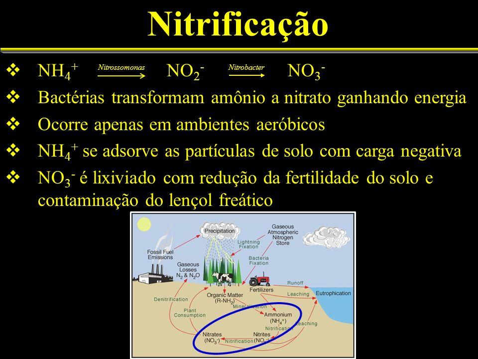 Nitrificação NH 4 + NO 2 - NO 3 - Bactérias transformam amônio a nitrato ganhando energia Ocorre apenas em ambientes aeróbicos NH 4 + se adsorve as partículas de solo com carga negativa NO 3 - é lixiviado com redução da fertilidade do solo e contaminação do lençol freático NitrossomonasNitrobacter