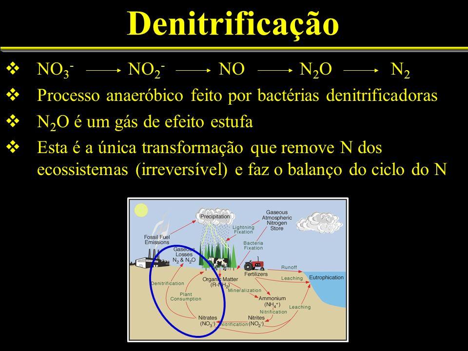 Processos da fixação biológica do N 2 Fixação Biológica N 2 2NH 3 + + H 2 Mediadores: enzima nitrogenase com proteção ao O 2, doadores de e -, ATP, Mg, Fe, Co, esqueletos carbonados Fonte de fixaçãoToneladas/ano N no solo105.000.000.000 N Mineralizado3.500.000.000 Absorção total de N1.400.000.000 N denitrificado135.000.000 N perdido (erosão/lixiviação)85.000.000 Fixação biológica total170.000.000 Leguminosas90.000.000 Gramíneas49.000.000 Ecossistemas florestais5.000.000 Outros26.000.000 Adaptado de Craswell 1990.