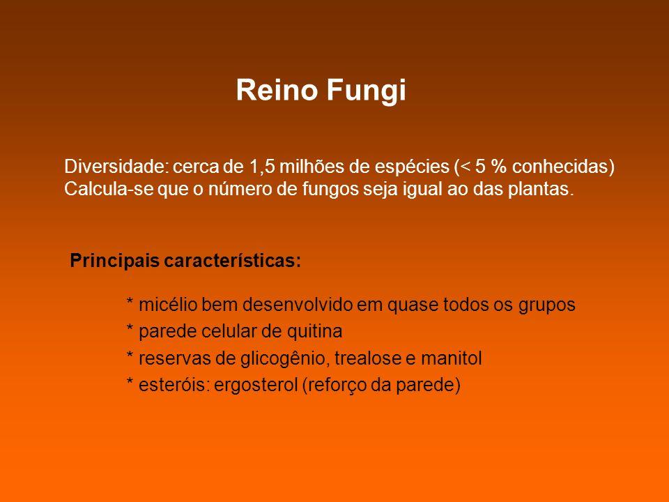 Reino Fungi Principais características: * micélio bem desenvolvido em quase todos os grupos * parede celular de quitina * reservas de glicogênio, trea
