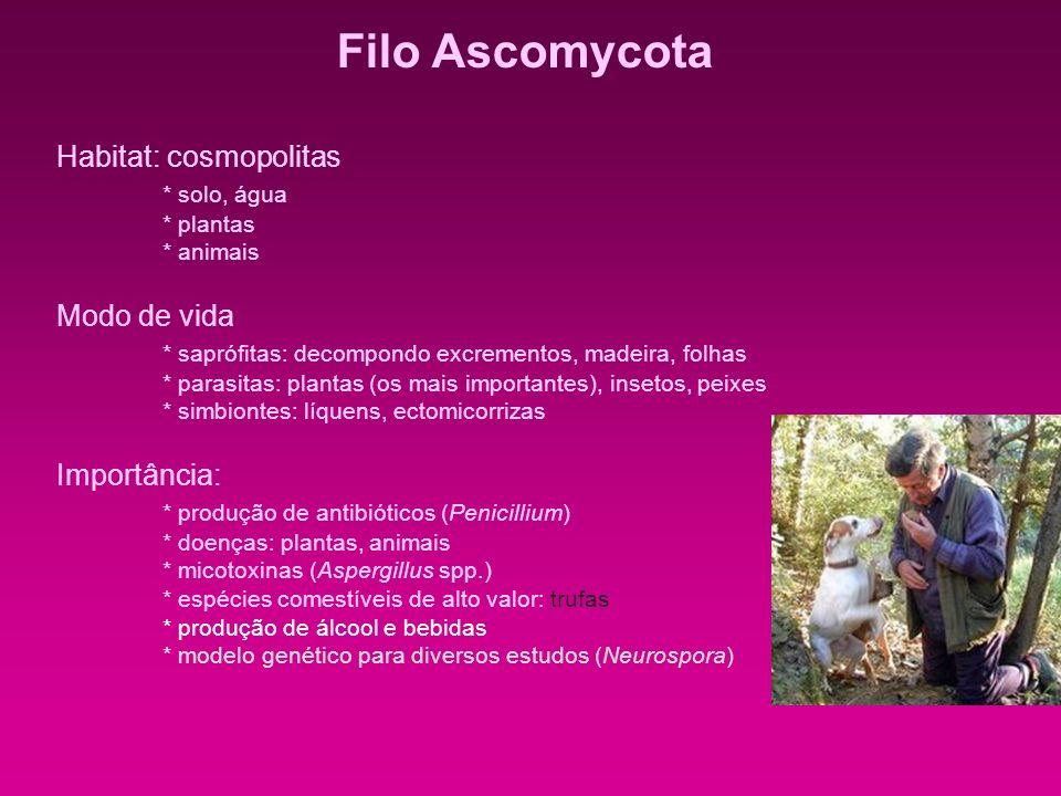 Filo Ascomycota Habitat: cosmopolitas * solo, água * plantas * animais Modo de vida * saprófitas: decompondo excrementos, madeira, folhas * parasitas: