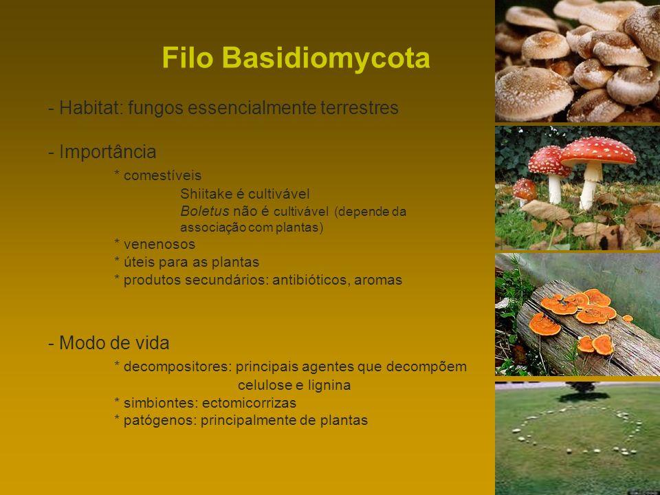 Filo Basidiomycota - Habitat: fungos essencialmente terrestres - Importância * comestíveis Shiitake é cultivável Boletus não é cultivável (depende da