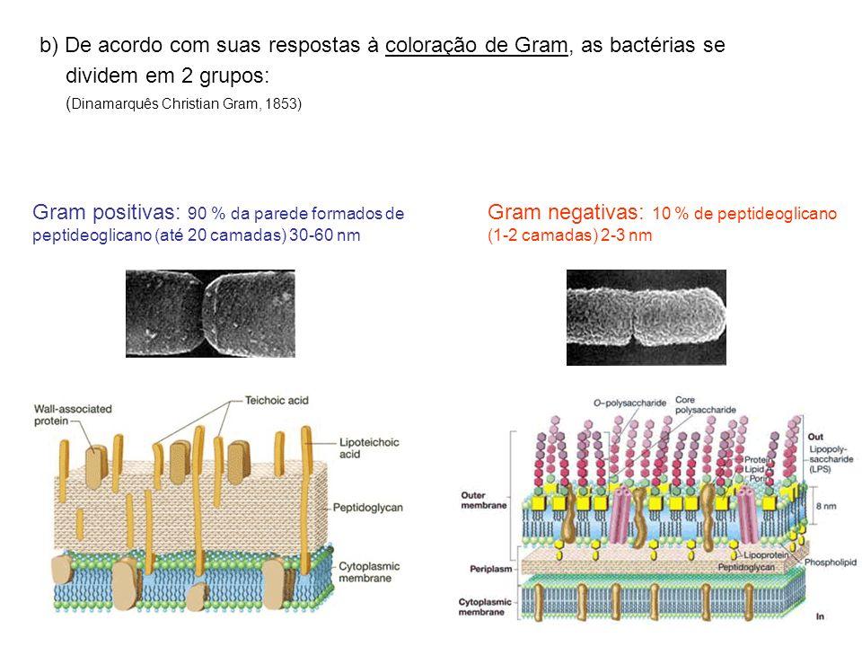 b) De acordo com suas respostas à coloração de Gram, as bactérias se dividem em 2 grupos: ( Dinamarquês Christian Gram, 1853) Gram negativas: 10 % de