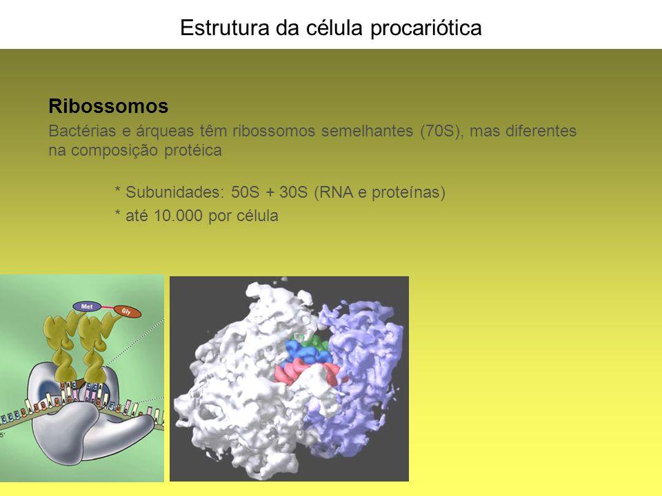 Estrutura da célula procariótica Ribossomos Bactérias e árqueas têm ribossomos semelhantes (70S), mas diferentes na composição protéica * Subunidades: