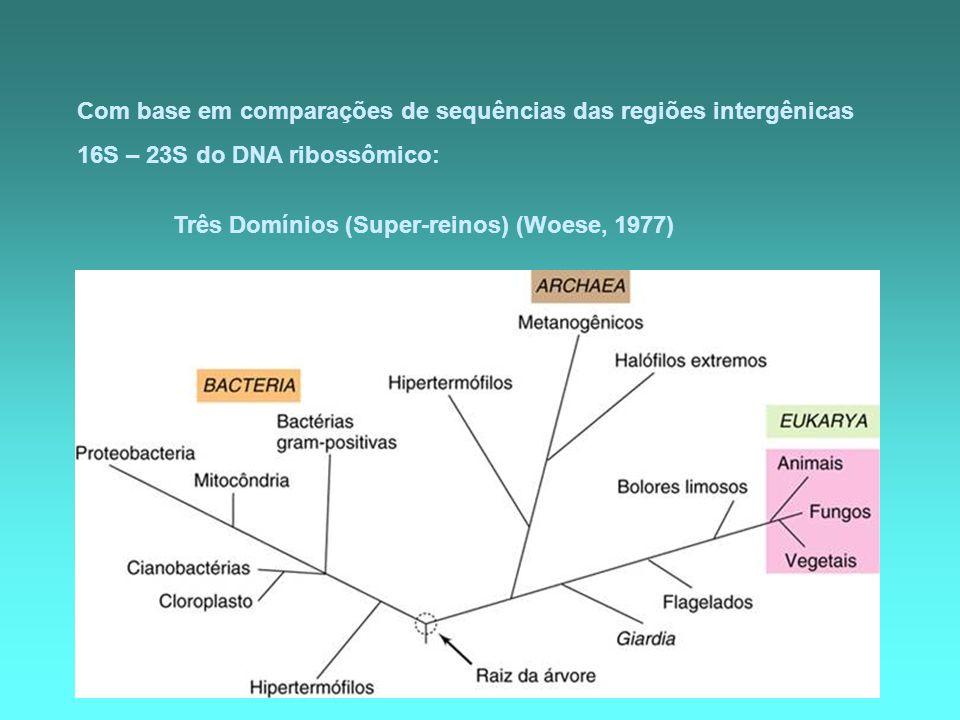 Com base em comparações de sequências das regiões intergênicas 16S – 23S do DNA ribossômico: Três Domínios (Super-reinos) (Woese, 1977)