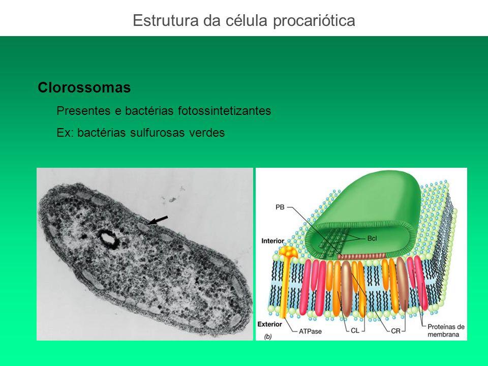 Clorossomas Presentes e bactérias fotossintetizantes Ex: bactérias sulfurosas verdes Estrutura da célula procariótica