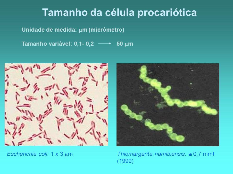 Tamanho da célula procariótica Unidade de medida: m (micrômetro) Tamanho variável: 0,1- 0,2 50 m Thiomargarita namibiensis: 0,7 mm! (1999) Escherichia