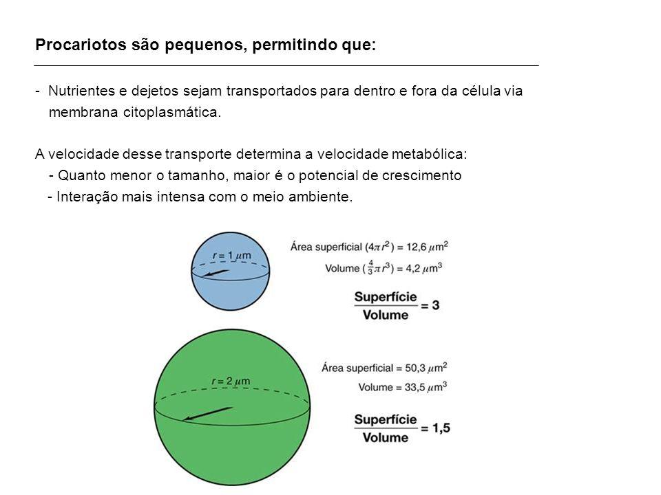 Procariotos são pequenos, permitindo que: - Nutrientes e dejetos sejam transportados para dentro e fora da célula via membrana citoplasmática. A veloc