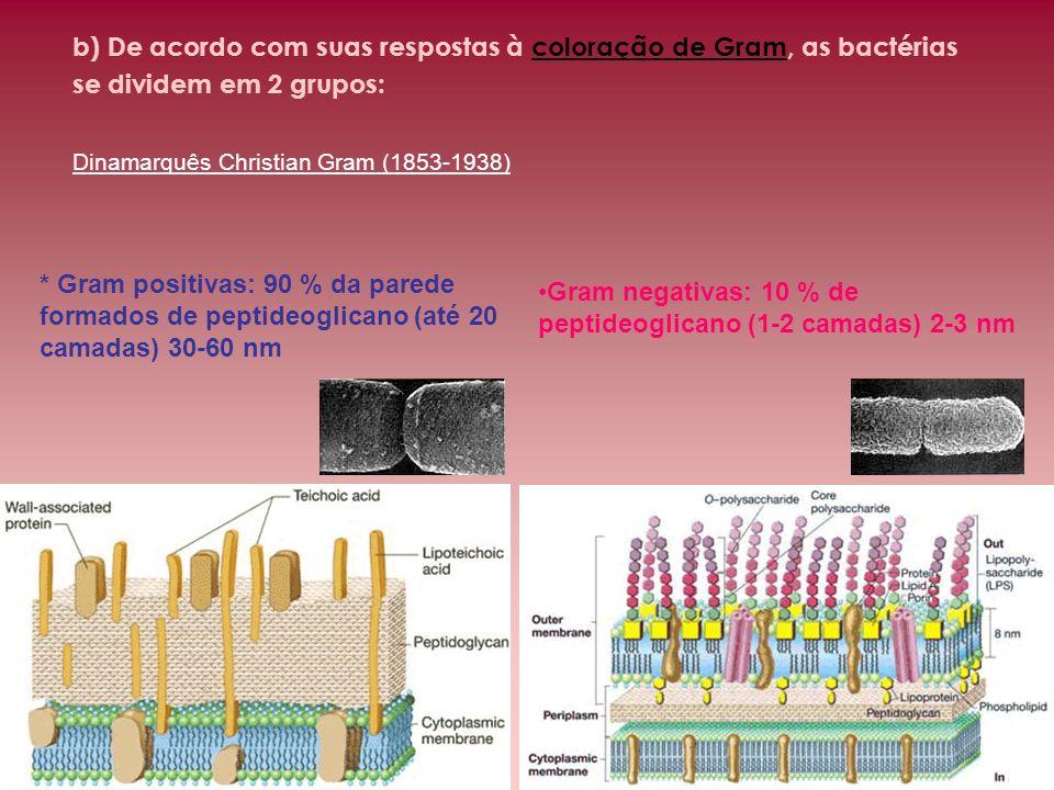 b) De acordo com suas respostas à coloração de Gram, as bactérias se dividem em 2 grupos: Dinamarquês Christian Gram (1853-1938) Gram negativas: 10 %