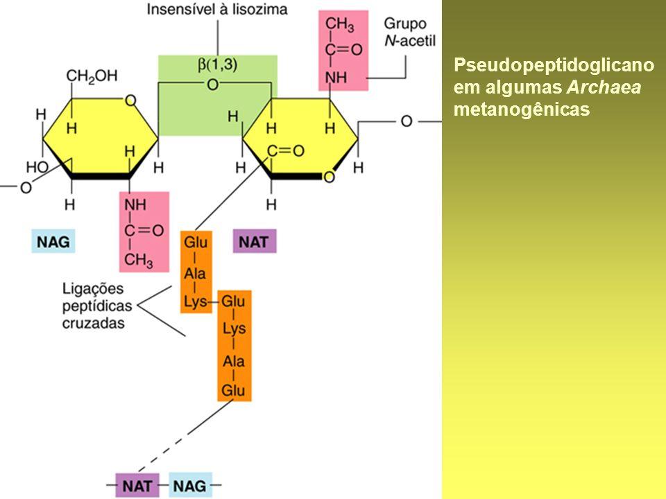 Pseudopeptidoglicano em algumas Archaea metanogênicas