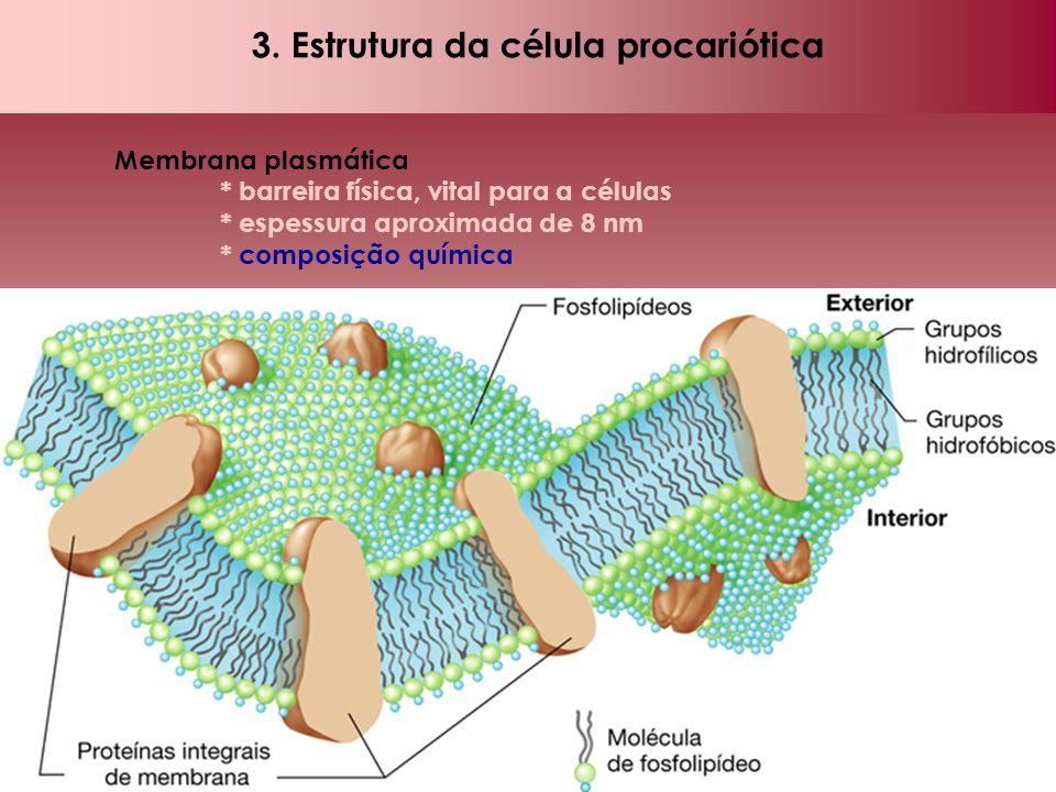 3. Estrutura da célula procariótica Membrana plasmática * barreira física, vital para a células * espessura aproximada de 8 nm * composição química