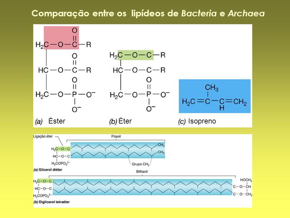 Éster Éter Isopreno Comparação entre os lipídeos de Bacteria e Archaea