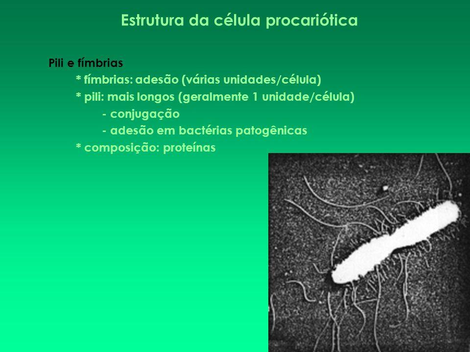 Estrutura da célula procariótica Pili e fímbrias * fímbrias: adesão (várias unidades/célula) * pili: mais longos (geralmente 1 unidade/célula) - conju