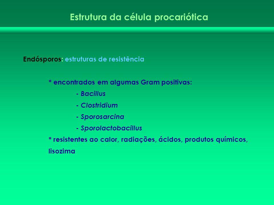Estrutura da célula procariótica Endósporos: estruturas de resistência * encontrados em algumas Gram positivas: - Bacillus - Clostridium - Sporosarcin
