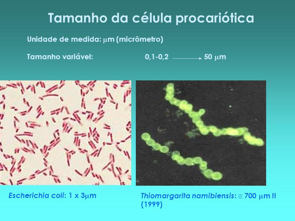 Tamanho da célula procariótica Unidade de medida: m (micrômetro) Tamanho variável:0,1-0,250 m Thiomargarita namibiensis : 700 m !! (1999) Escherichia