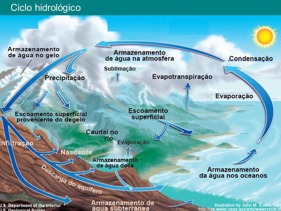 Introdução No meio aquático os nutrientes estão diluídos.