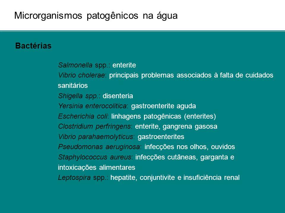 Microrganismos patogênicos na água Bactérias Salmonella spp.: enterite Vibrio cholerae: principais problemas associados à falta de cuidados sanitários