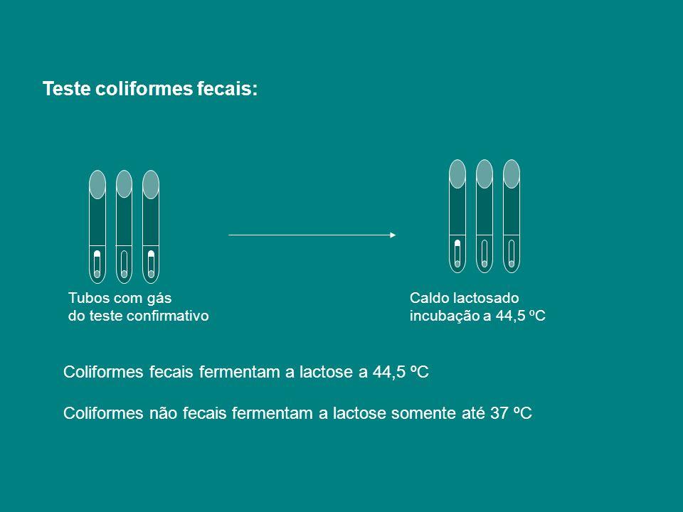 Tubos com gás Caldo lactosado do teste confirmativo incubação a 44,5 ºC Teste coliformes fecais: Coliformes fecais fermentam a lactose a 44,5 ºC Colif