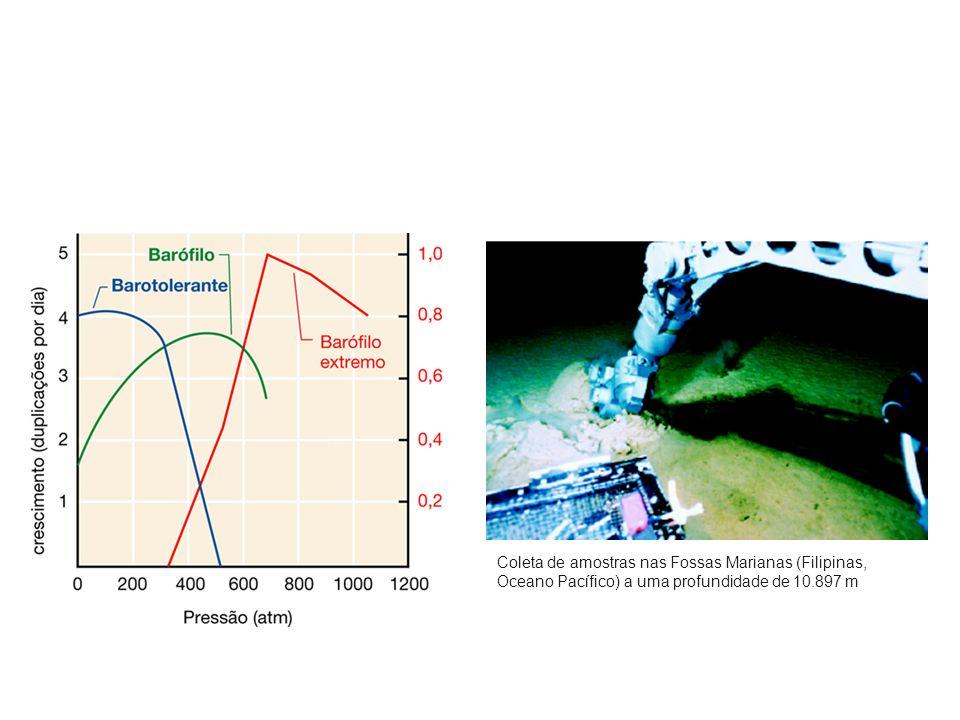 Coleta de amostras nas Fossas Marianas (Filipinas, Oceano Pacífico) a uma profundidade de 10.897 m