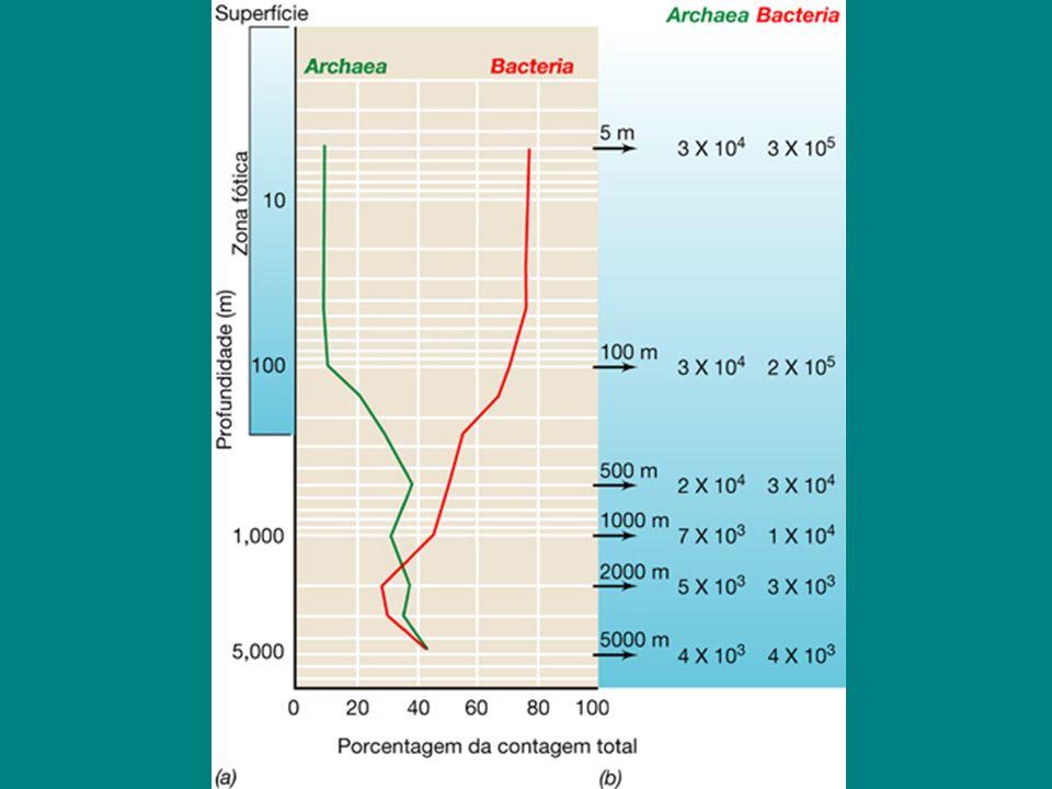 Microrganismos patogênicos na água Bactérias Salmonella spp.: enterite Vibrio cholerae: principais problemas associados à falta de cuidados sanitários Shigella spp.: disenteria Yersinia enterocolitica: gastroenterite aguda Escherichia coli: linhagens patogênicas (enterites) Clostridium perfringens: enterite, gangrena gasosa Vibrio parahaemolyticus: gastroenterites Pseudomonas aeruginosa: infecções nos olhos, ouvidos Staphylococcus aureus: infecções cutâneas, garganta e intoxicações alimentares Leptospira spp.: hepatite, conjuntivite e insuficiência renal
