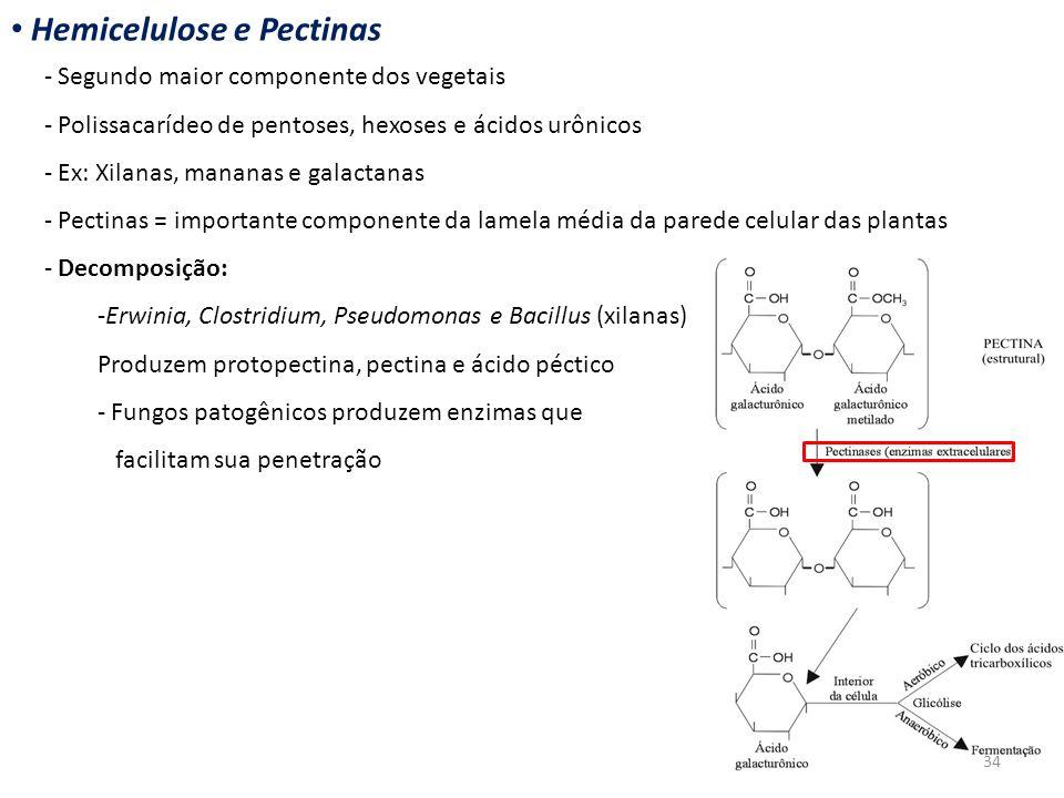 Hemicelulose e Pectinas - Segundo maior componente dos vegetais - Polissacarídeo de pentoses, hexoses e ácidos urônicos - Ex: Xilanas, mananas e galac