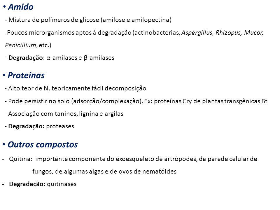 Amido - Mistura de polímeros de glicose (amilose e amilopectina) -Poucos microrganismos aptos à degradação (actinobacterias, Aspergillus, Rhizopus, Mu
