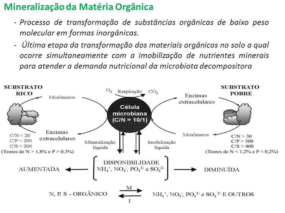 Mineralização da Matéria Orgânica -Processo de transformação de substâncias orgânicas de baixo peso molecular em formas inorgânicas. - Última etapa da