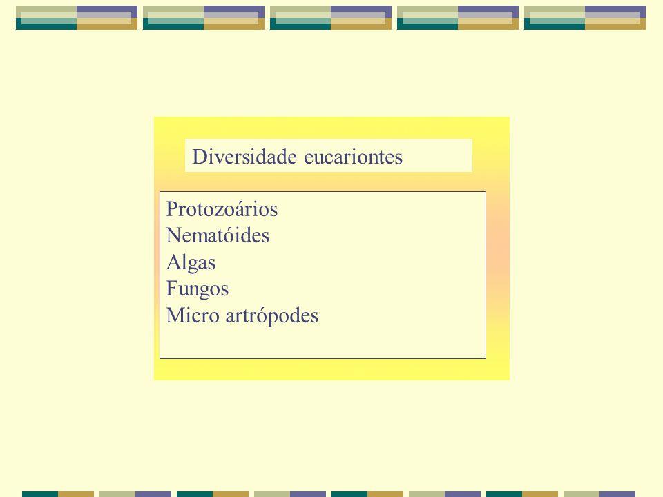 Diversidade eucariontes Protozoários Nematóides Algas Fungos Micro artrópodes