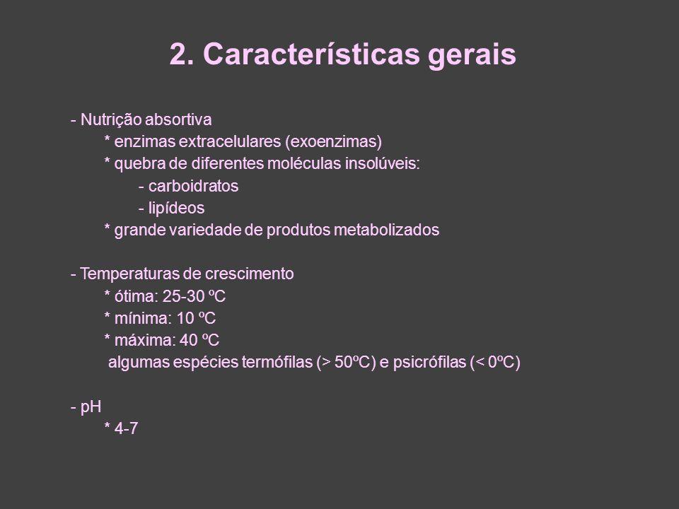 2. Características gerais - Nutrição absortiva * enzimas extracelulares (exoenzimas) * quebra de diferentes moléculas insolúveis: - carboidratos - lip