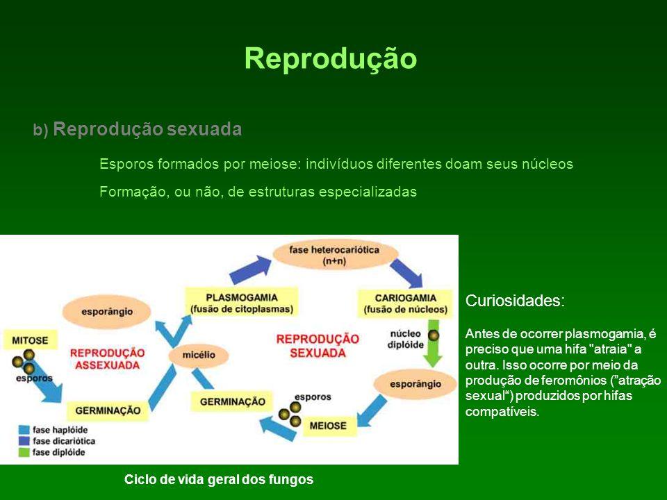 Reprodução b) Reprodução sexuada Esporos formados por meiose: indivíduos diferentes doam seus núcleos Formação, ou não, de estruturas especializadas C