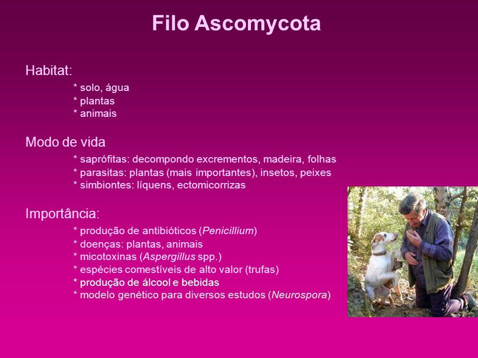 Filo Ascomycota Habitat: * solo, água * plantas * animais Modo de vida * saprófitas: decompondo excrementos, madeira, folhas * parasitas: plantas (mai