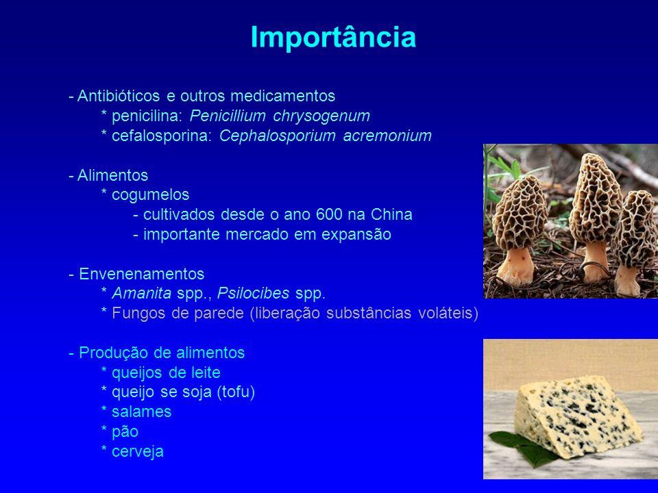 - Antibióticos e outros medicamentos * penicilina: Penicillium chrysogenum * cefalosporina: Cephalosporium acremonium - Alimentos * cogumelos - cultiv