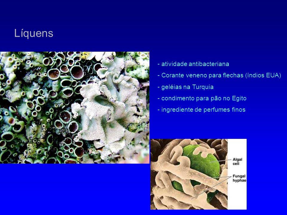 Líquens - atividade antibacteriana - Corante veneno para flechas (índios EUA) - geléias na Turquia - condimento para pão no Egito - ingrediente de per