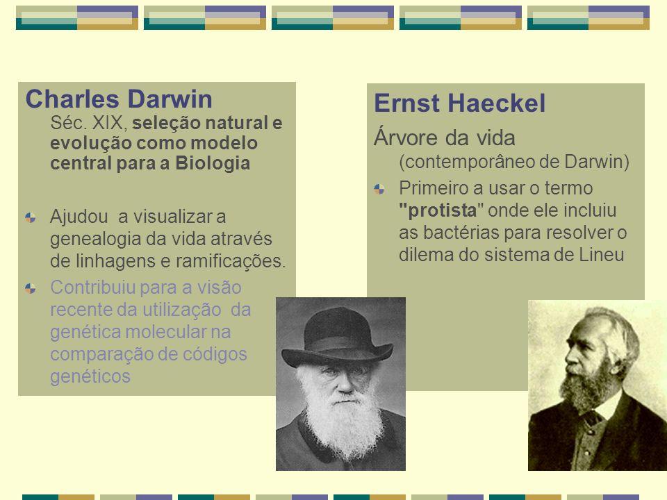 Charles Darwin Séc. XIX, seleção natural e evolução como modelo central para a Biologia Ajudou a visualizar a genealogia da vida através de linhagens