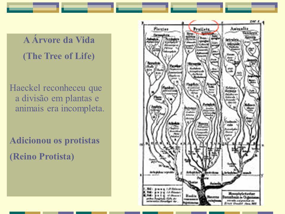 A Árvore da Vida (The Tree of Life) Haeckel reconheceu que a divisão em plantas e animais era incompleta. Adicionou os protistas (Reino Protista)