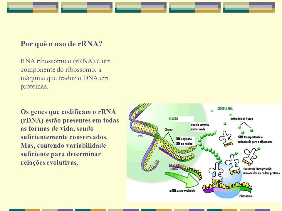 Por quê o uso de rRNA? RNA ribossômico (rRNA) é um componente do ribossomo, a máquina que traduz o DNA em proteínas. Os genes que codificam o rRNA (rD