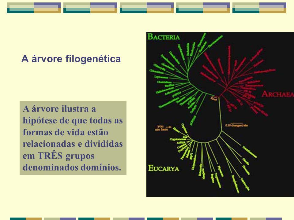 A árvore filogenética A árvore ilustra a hipótese de que todas as formas de vida estão relacionadas e divididas em TRÊS grupos denominados domínios.