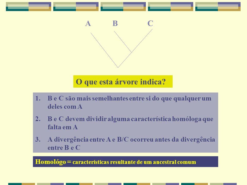 ABC O que esta árvore indica? 1.B e C são mais semelhantes entre si do que qualquer um deles com A 2. B e C devem dividir alguma característica homólo