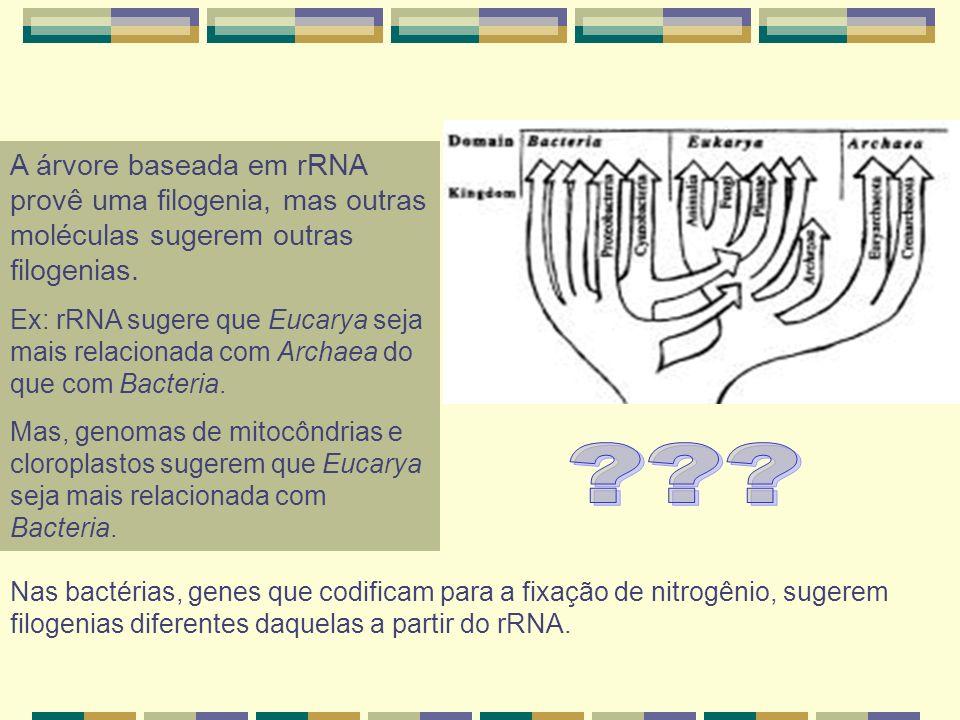 A árvore baseada em rRNA provê uma filogenia, mas outras moléculas sugerem outras filogenias. Ex: rRNA sugere que Eucarya seja mais relacionada com Ar