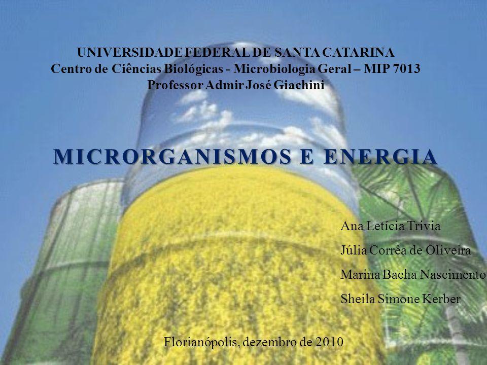 Imagens http://amanatureza.com/conteudo/noticias/angra-3-polemica-energia-nuclear http://manifestzine.blogspot.com/2010_03_01_archive.html http://manifestzine.blogspot.com/2010_03_01_archive.html http://ambiente.maiadigital.pt/ambiente/energia/mais-informacao-1/sobre-as-energias-alternativas/ http://ambiente.maiadigital.pt/ambiente/energia/mais-informacao-1/sobre-as-energias-alternativas/ http://www.sescsp.org.br/sesc/revistas_sesc/ http://www.sescsp.org.br/sesc/revistas_sesc/ http://construcaoearquitetura.blogspot.com/2010/03/usina-hidreletrica-de-itaipu.html http://construcaoearquitetura.blogspot.com/2010/03/usina-hidreletrica-de-itaipu.html http://gabriellamineracao.com.br/site/produtos.php http://gabriellamineracao.com.br/site/produtos.php http://petroleolusofono.blogspot.com/ http://petroleolusofono.blogspot.com/ http://sosriosdobrasil.blogspot.com www.nrel.gov www.lookfordiagnosis.com www.butbn.cas.cz/ccala/index.php http://ecoserver.imbb.forth.gr http://arcticboy.arcticboy.com www.portalsaofrancisco.com.br http://pt.wikipedia.org http://quiprona.wordpress.com/2009/07/12/saccharomyces-cereviseae-turbinadas/ http://www.jgi.doe.gov/education/bioenergy/bioenergy_6.html http://www.glerl.noaa.gov/seagrant/GLWL/Algae/Cyanophyta/Cards/Trichodesmium.html http://www.unisa.edu.au/maths/phenomics/projects.asp http://schaechter.asmblog.org/schaechter/images/2007/07/01/bacteroides_fragilis.jpg http://4.bp.blogspot.com/_gQbLhYQDz7U/TGAtUUuMfWI/AAAAAAAADX0/QpBavK4W1yw/s1600/bifidobacterium.jpg http://microbewiki.kenyon.edu/images/thumb/d/d7/Methanosarcina_3.jpg/300px-Methanosarcina_3.jpg http://visualsunlimited.photoshelter.com/gallery-image/Blog-Micro/G0000zyBNOnvNzX8/I0000IzAUniT53sg http://journals.sfu.ca/sigen/index.php/sigen/article/viewArticle/sigs.39508/107 http://microbewiki.kenyon.edu/images/thumb/f/f2/Widdelpicture.jpg/200px-Widdelpicture.jpg * Todos acessados em novembro de 2010