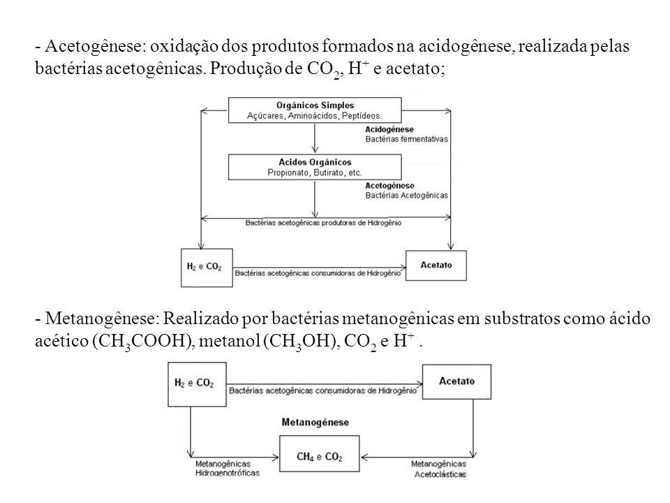 - Acetogênese: oxidação dos produtos formados na acidogênese, realizada pelas bactérias acetogênicas. Produção de CO 2, H + e acetato; - Metanogênese:
