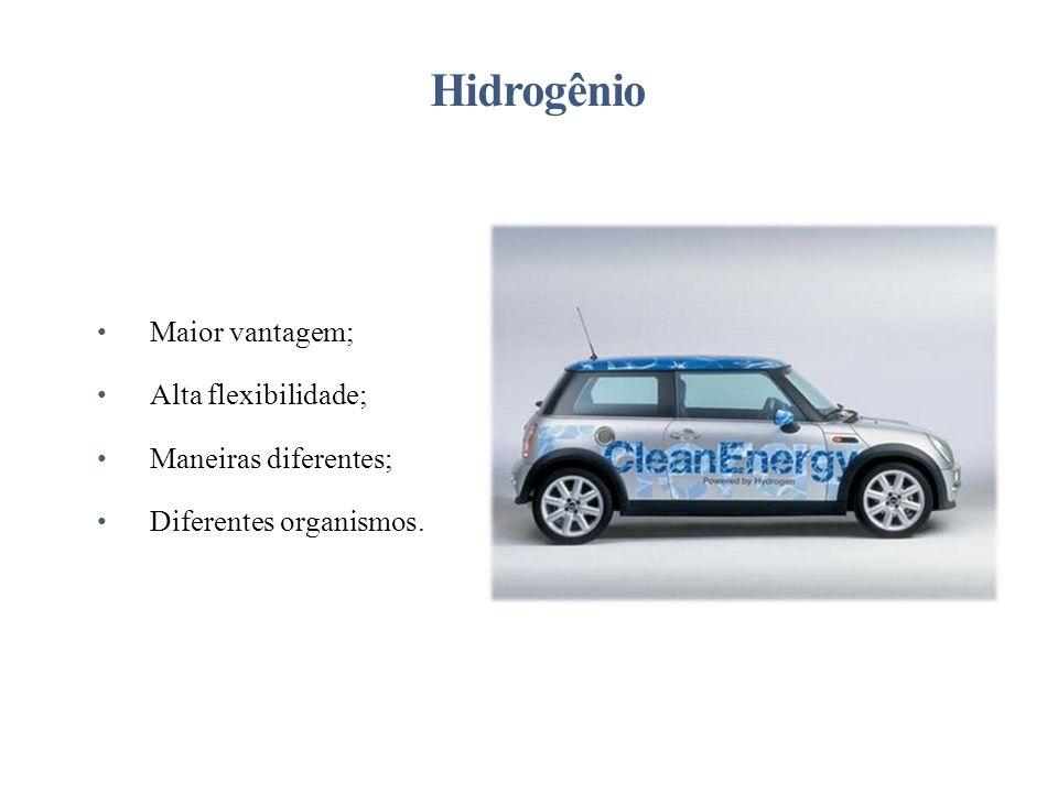 Maior vantagem; Alta flexibilidade; Maneiras diferentes; Diferentes organismos. Hidrogênio