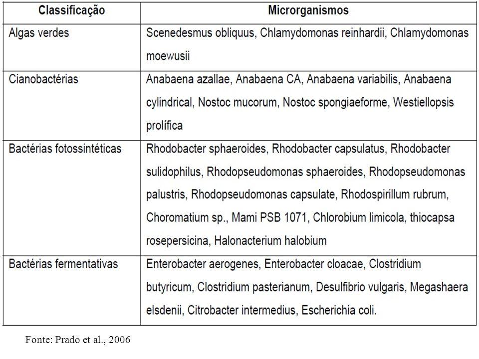 Fonte: Prado et al., 2006