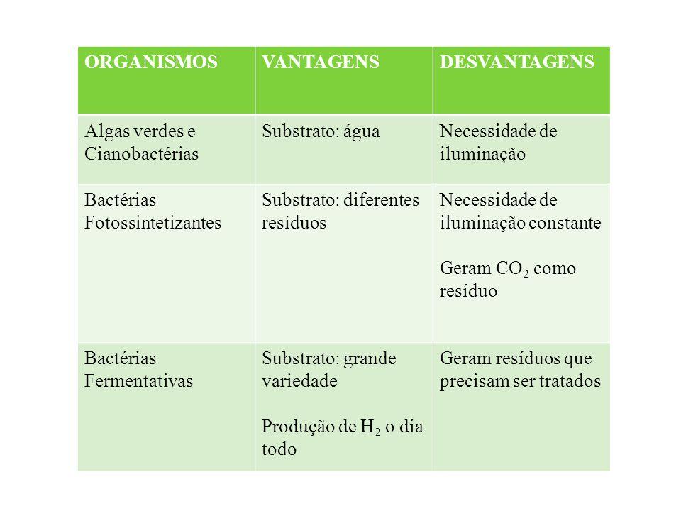 ORGANISMOSVANTAGENSDESVANTAGENS Algas verdes e Cianobactérias Substrato: águaNecessidade de iluminação Bactérias Fotossintetizantes Substrato: diferen